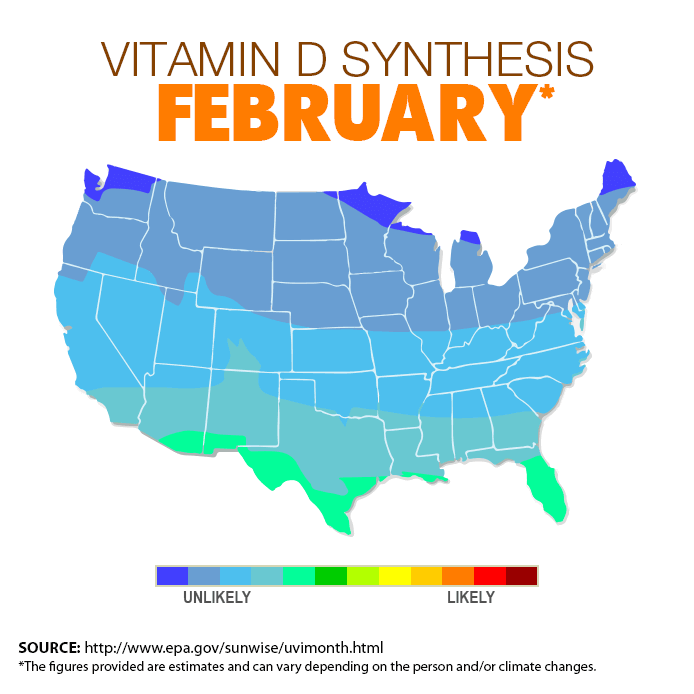 vitamin d synthesis february